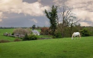 The White Horse © Caroline Jones