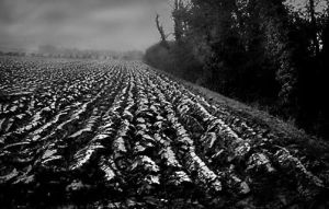 Winter Field © Keith Jones